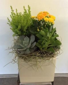 Ceramic Succulent Cube