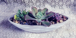 Ceramic Succulent Garden  in Dayton, OH | ED SMITH FLOWERS & GIFTS INC.