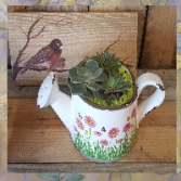 Ceramic Watering Can Plants