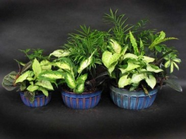 Cermic Dish Gardens  8, 10, 12,  and 14 inches