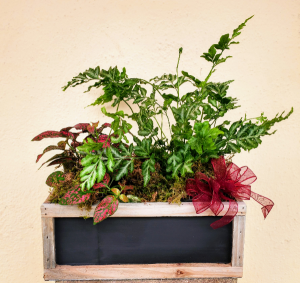 Chalkboard planter with house plants Plant in Tillamook, OR | ANDERSON FLORIST
