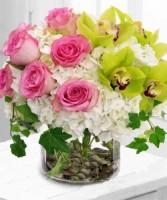 CHARMING Cymbidium Orchids, Roses & Hydrangeas