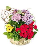 Charming Garden Basket Flowering Plants