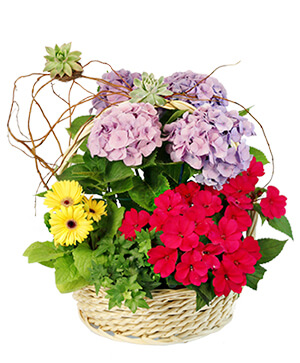 Charming Garden Basket Flowering Plants in Jamestown, NC | Blossoms Florist & Bakery