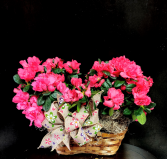 Cheerful Hot Pink Azalea Basket