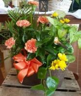 Cheerful Planter Planter