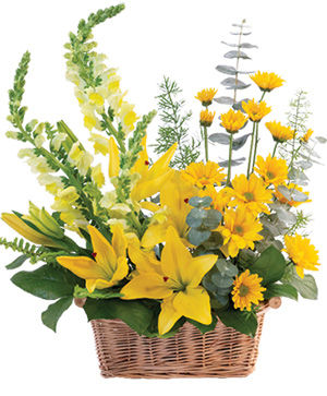 Cheerful Yellow Basket Arrangement in Roscommon, MI | White Pine & Petals f/k/a Bloomers Flower Shoppe
