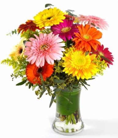 Cheery Beautiful assortment of gerbera daisies.