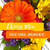 Cheery Mix Fresh Floral Arrangement