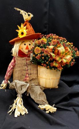 Cheery Scarecrow Mum Basket Plants