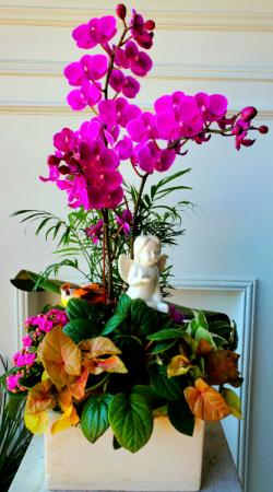 Cherub Garden Pink Orchid Dish Garden