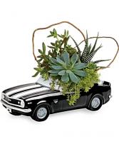 Chevy Camaro Plant Garden succulent garden