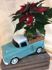 Chevy truck with Poinsettia