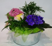 Chirpy Planter Indoor flowering plants