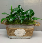 Choose Happiness planter