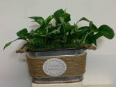 Choose Happiness Tin with pothos plants Indoor planter