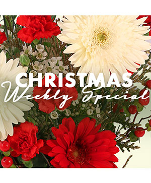 Christmas Arrangement Designer's Choice in Whitehall, PA | PRECIOUS PETALS FLORIST