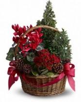 Christmas Basket of Cheer Seasonal plants in basket