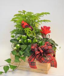 Christmas Cardinal Box