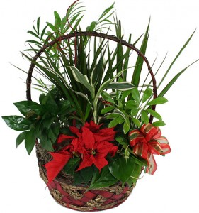 Christmas Dish Garden Basket  Fresh plants for the Holiday