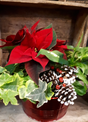 Christmas Dishgarden  in Vernon, BC | SIMPLY BASKETS AND HARRIS FLOWERS