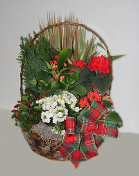 Christmas Euro Gardens Basket Of Plants In Penn Yan Ny Garden