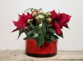 Christmas Glass Planter
