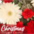 Christmas Handtied Cut Flowers  Cut flowers NO VASE