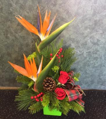 Christmas in Paradise Dish Arrangement