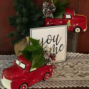 Christmas Memories Plant in Mazomanie, WI | B-STYLE FLORAL AND GIFTS