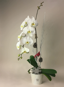 Wintery Orchid  Christmas Planter