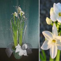 Christmas Paperwhite Plant