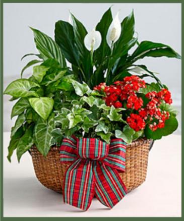 Christmas Plant Garden
