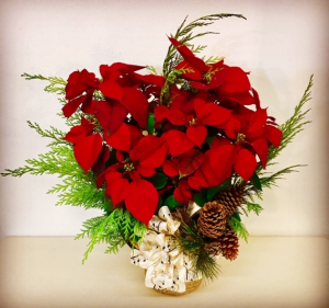 "Christmas Poinsetta 8"" Plant with Pine Cones in Plainview, TX 