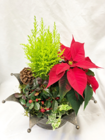 Christmas Royal Planter Planter