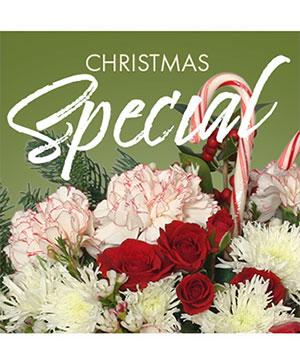 Christmas Special Designer's Choice in Sparta, IL | Teri Jean's Florist