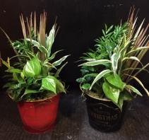 Christmas Tin Planters