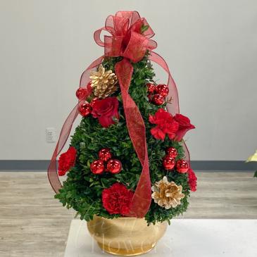 Christmas Traditions Boxwood Tree