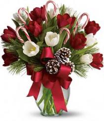 Christmas Tulips Christmas