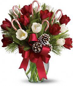 Christmas Tulips Holiday Flowers