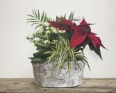 Christmas White Bark Planter