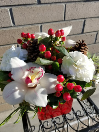 christmas with orchids