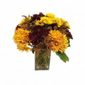 Chrysanthemum Lover