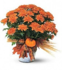 Chrysanthemum Planter