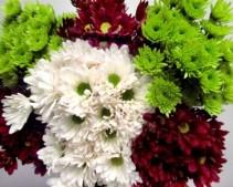 Chrysanthemum 25 stems Chrysanthemum