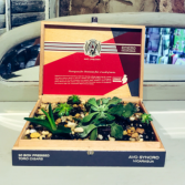 Cigar Box Succulent Garden gifts for him