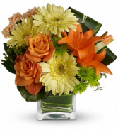 Citrus Crush - 550 Flower arrangement
