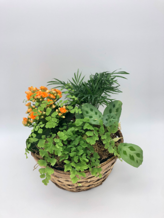 Clic Dish Garden Potted Plants In