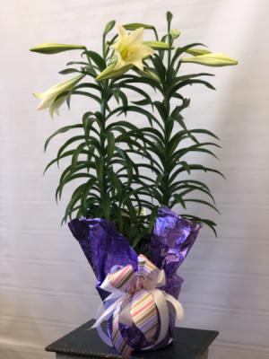 Classic Double Stem Easter Lily  Blooming Plant  in Joliet, IL | LABO'S FLOWERS & GIFTS