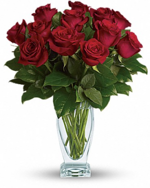 Classic Dozen Red Roses  in Winnipeg, MB | KINGS FLORIST LTD